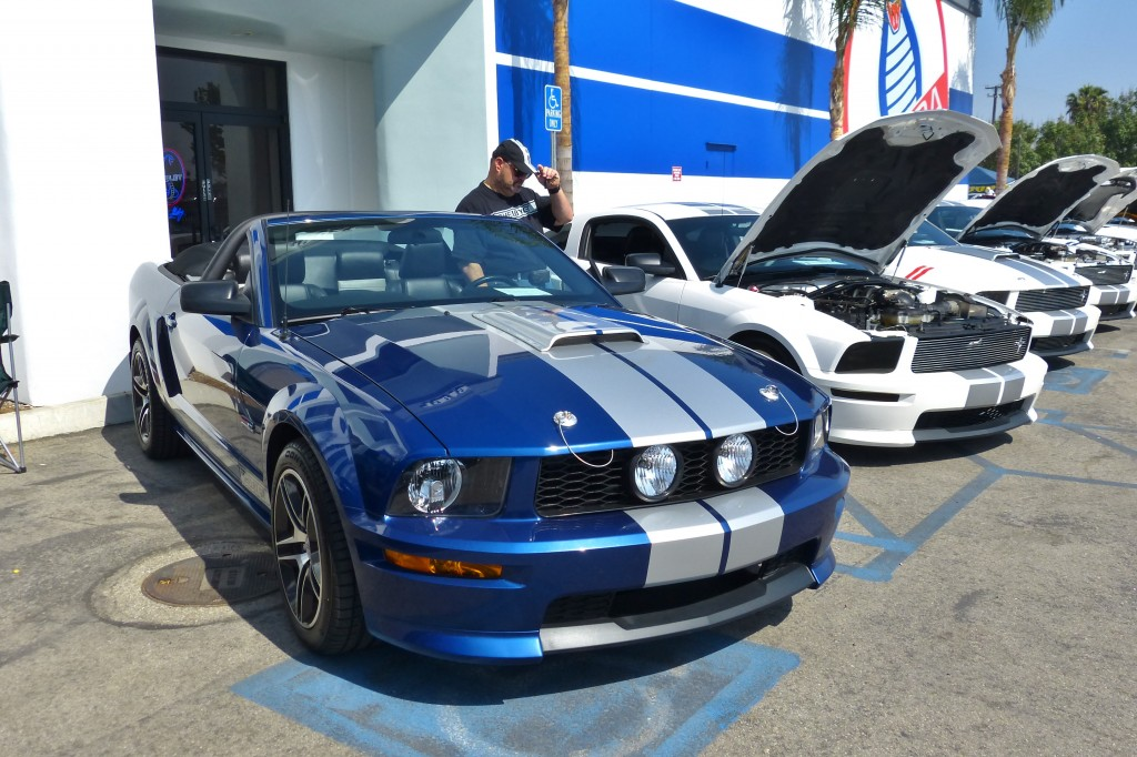 My N my GT; this is my very 2008 Shelby GT convert, lined up with a group of similar late model Shelby Mustangs of which there were dozens on hand.